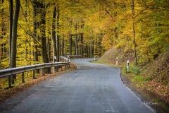 Herbst im Sauerland 04