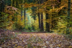 Herbst im Sauerland 05