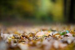 Herbst im Sauerland 06