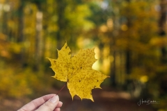 Herbst im Sauerland 07