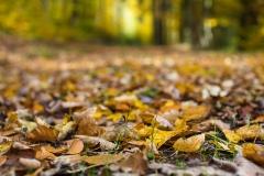 Herbst im Sauerland 08