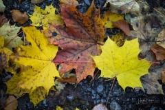 Herbst im Sauerland 09