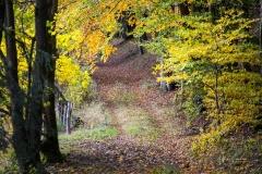 Herbst im Sauerland 12