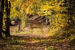 Herbst im Sauerland 13