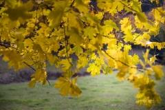 Herbst im Sauerland 15