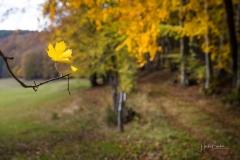 Herbst im Sauerland 16