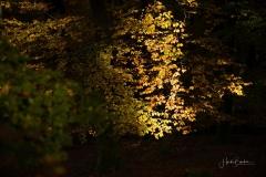 Buchenwald im Herbst 2