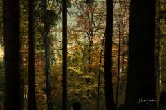 Buchenwald im Herbst 6