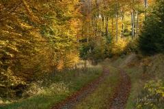 Buchenwald im Herbst 7