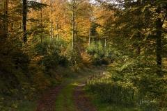 Buchenwald im Herbst 13