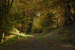 Buchenwald im Herbst 14