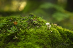 Moosbedeckter Waldboden