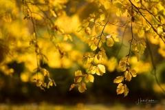 Golden leuchtendes Herbstlaub 3