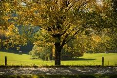 Herbstlich verfärbter Baum am Wegesrand