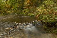 Kleiner Bach im Herbstwald