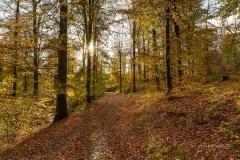Sonnendurchfluteter Buchenwald im Herbst 2