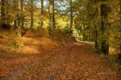 Sonnendurchfluteter Buchenwald im Herbst 6