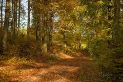 Sonnendurchfluteter Buchenwald im Herbst 7