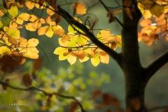 Golden leuchtendes Herbstlaub 6