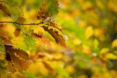Golden leuchtendes Herbstlaub 8