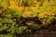 Herbstwald am Nordhang des Kahlen Asten 1
