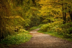 Herbstwald am Nordhang des Kahlen Asten 2