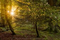 Herbstwald am Nordhang des Kahlen Asten 3