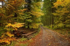 Herbstlich verfärbter Buchenwald 1