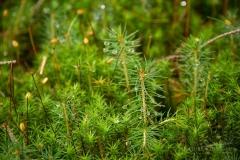 Herbstwald-903