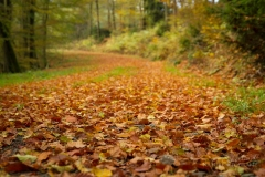 Waldweg von Herbstlaub bedeckt 1