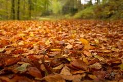 Waldweg von Herbstlaub bedeckt 2