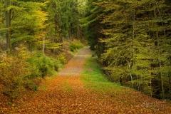 Waldweg von Herbstlaub bedeckt 3
