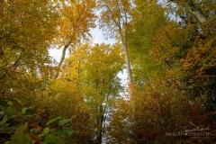 Herbstlich bunte Baumkronen 1