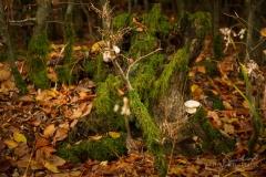 Mit Laub bedeckter Waldboden