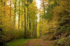 Waldweg von Herbstlaub bedeckt 6