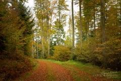 Waldweg von Herbstlaub bedeckt 7