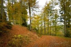 Waldweg von Herbstlaub bedeckt 8