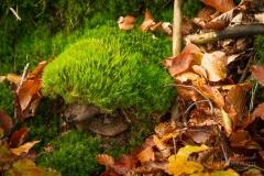 Herbst-Igel aus Moos