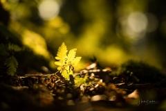 Herbstwald02