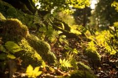 Herbstwald03