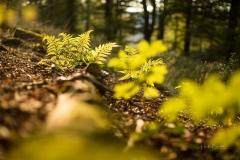Herbstwald04