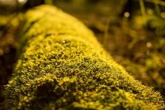 Herbstwald05