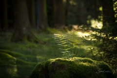 Herbstwald08