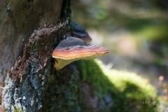 Herbstwald11