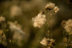 Herbstwald12