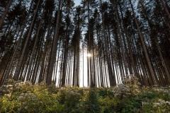 Herbstwald13
