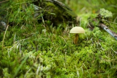 Herbstwald14