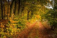 Waldweg von Herbstlaub bedeckt 9