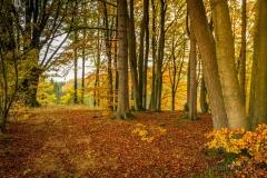 Herbstlicher Buchenwald 1