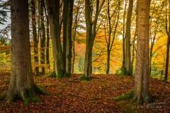 Herbstlicher Buchenwald 2
